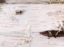 White birch bark Royalty Free Stock Photography