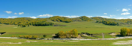 White Birch on the hillside in the autumn Stock Photography