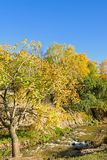 White Birch and stream in the autumn stock photos