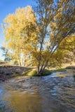White Birch and stream in the autumn Stock Photos