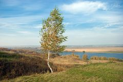 White birch tree in countryside Stock Images