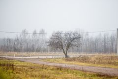 White birch trees in late autumn stock photography