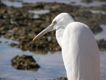 White bird. The photo is made in Egypt. A heron on a beach Stock Images