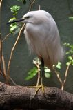 White bird Royalty Free Stock Photo