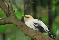 White Bird Royalty Free Stock Photos