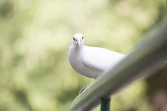 White bird Stock Image