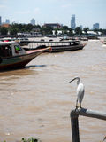 White bird and the boat with brown river. From holiday travel at thailand Stock Photography
