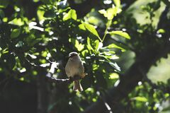 White Bird on Brown Tree Branch during Daytime Stock Photos