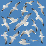 White bird collection on sky Royalty Free Stock Photography
