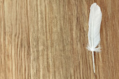 White bird feather on brown wooden background with empty space f. White bird feather on brown wooden background taken closeup with empty space for text Royalty Free Stock Photos