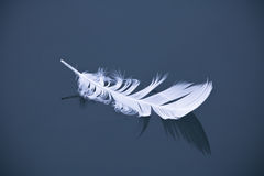 White bird feather  floating on dark blue still water lake isolated Royalty Free Stock Images