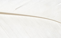 White bird feather macro abstract background Royalty Free Stock Photos