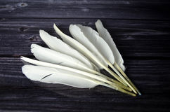 White Bird feathers. Bird feathers on a wooden plate Stock Photo