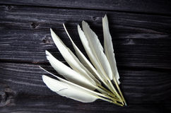 White Bird feathers. Bird feathers on a wooden plate Royalty Free Stock Photo