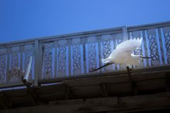 White bird in flight below pier royalty free stock photography