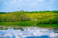 white bird flying in swamp royalty free stock photo