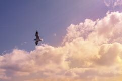 White Bird Flying Under Cloudy Sky during Daytime Royalty Free Stock Photos