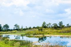 White bird flying. In the swamp of Florida Stock Image