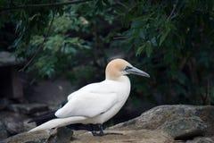 White bird Stock Photo