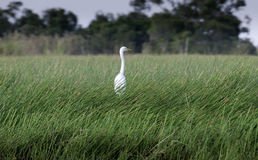 White bird on green grass at forest Royalty Free Stock Photos