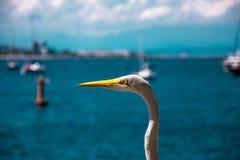 White bird - heron - on a summer beach scenario in Rio de Janeir. Rio de Janeiro, Brazil - December, 2017. White bird - heron - on a summer beach scenario in Rio Stock Image
