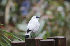 The white bird at hk park Royalty Free Stock Images