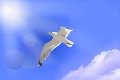 White bird of paradise. On blue sky royalty free stock photos