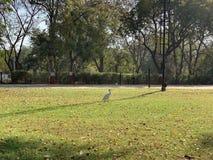 White bird. Bird in the park stock image