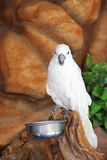 White bird Stock Images