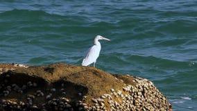 White Bird Royalty Free Stock Images