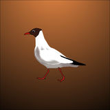 White bird seagull. With brown background Stock Images