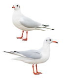 White bird seagull isolated Stock Photos