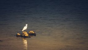 White bird seagull sea bird on the rock on the sea. Vintage tone nature background stock images