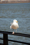 White bird. Sitting on the fence Stock Photography