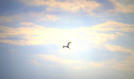 White bird on sky Royalty Free Stock Images