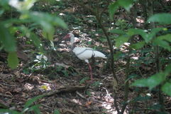 white bird in tropical forest stock photography