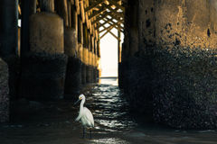 White bird under a pier Royalty Free Stock Image