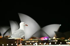 White Bird With View Of Sydney Opera House Royalty Free Stock Images