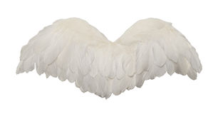 White Bird Wings. Fanned Out Bird Wings Isolated on White Background Stock Photos