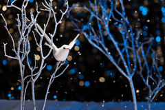 White bird in winter Royalty Free Stock Images