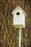 White birdhouse on a century-old oak Stock Photo