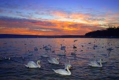 White birds along evenig seashore Stock Photo