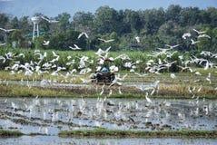 White birds royalty free stock image