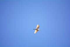 White birds flying Royalty Free Stock Image