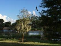 White birds and oak trees Royalty Free Stock Photo