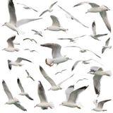 White birds set isolated Royalty Free Stock Photography