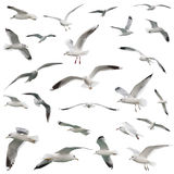 White birds set. isolated Royalty Free Stock Images
