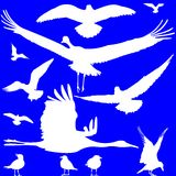White birds silhouettes over blue Royalty Free Stock Image