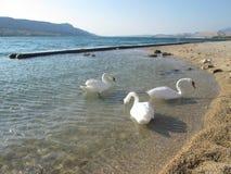 White birds stock photography