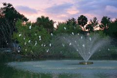 White Birds in Tree. With fountain in front Stock Photos